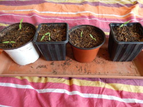 Tomates17 mars