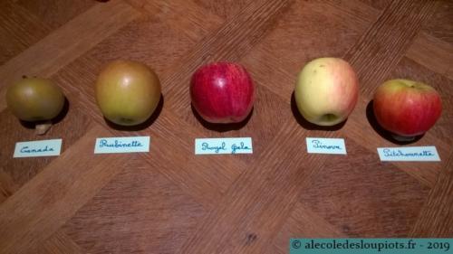 Les 5 variétés